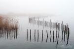 Brouillard à Mémard (Savoie 02_2016 ) 3