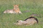 LIONS (AFS2016)