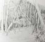 Mangrovenwald Bleistift