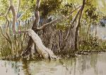 Im Mangrovenwald Takuapa