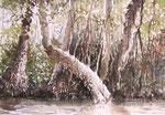 Mangrovenwald 2