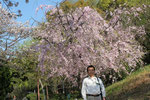 城西公園のしだれ桜