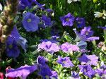 Wunderschöne Blumen erfreuen des Besuchers Auge
