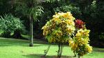 Tiefgrün und bunt durch günstiges Regenklima