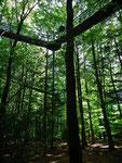 Hier einen Blick hoch in den Baumkronenweg in luftiger Höhe