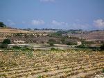Karge Bepflanzungen, bzw. Gemüseanlagen . . .