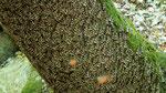 Millionen von Schmetterlingen setzen sich auf die Baumrinden