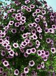 Eine bunte Vielfalt an Blumen . . .