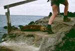 Seelöwen lassen sich durch nichts stören