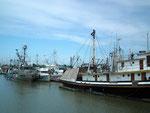 Die grösseren Fischkutter verarbeiten die Fische direkt schon an Bord