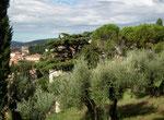 . . . bzw. ins Olivgrüne; Olivenbäume mit ihrem silbernen Blätterwerk