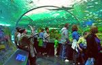 Das kalte windige Toronto (ca. 3-5° C) «zwingt» uns zum Aufwärmen ins Ripley's Aquarium