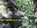 Bären gab es schon zu Urzeiten im Bündnerland . . .