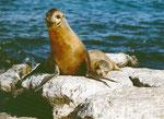 Robben beobachten uns...