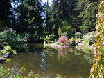 Hübsch angelegter Tümpel und Pflanzen am Uferrand