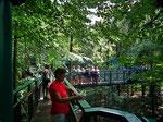 Teilweise schattiger Spaziergang in und über den Baumkronen