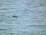 Ein erster Seeotter beim morgendlichen Bade begrüsst uns