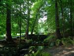 Durch saftig grüne und lichte Waldwege gehts bergauf/ab