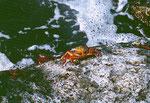 Suppenteller grosse Krabben
