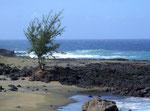 reicht bis ans und ins Meer und bildet einen schönen Farbkontrast zum blauen Meer . . .
