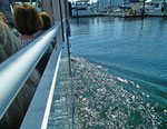 . . . und führt die Sightseeing-Tour auf dem Wasser fort