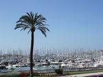 Der riesige Jachthafen von Palma mit hunderten von Booten und Jachten