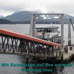 Mit einem Elektro-Katamaran fahren wir nochmals auf Sea animals wahtching tour