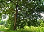 Saftiges Grün, Sonnenschein, frische Luft !