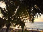 . . . südlichen Flair unter den Palmen