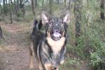 Dereck siendo medio perro Lobo busca su presa.. pero a mi no !!!