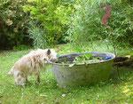Erfrischung beim Gartengang im Sommer 2009