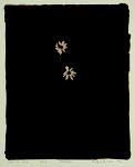 3月10日-3月22日 山内舞子企画 竹谷出 / 破光野草図