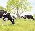 「草を巡る牛」2017 水彩