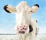 「冬と白い牛」 2014 水彩