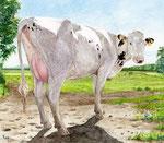 「朝と白い牛」2016 水彩