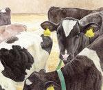 「子牛のすきま」2016 水彩