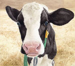 「ミルクくれるの?」 2013 水彩
