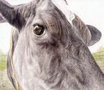 「年寄り牛の瞳」 2014 水彩