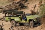 Baboons übernehmen das Steuer
