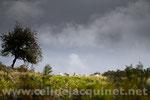Les moutons, ciel d'orage - tirage brillant contrecollé sur Alu - 60 x 40 cm - 60 euros TTC