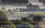 Campagne dans la brume - tirage brillant contrecollé sur Alu - 75 x 50 cm - 90 euros TTC