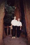 1998: Redwood trees-Muir Woods