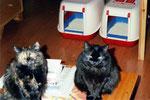 Evelins Katzen Sina und Sininen