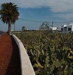 Jardín de Cactus ...