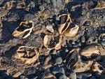 Diese Fossilienfunde stammen größtenteils von den Schalen einer Meeresschnecke.
