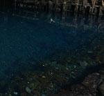 In dem unteririschen See leben kleine weiße Krebse, die es sonst nur in Tiefen von 2000 Metern gibt