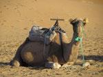 mir ist heute nicht nach Kamel