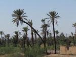 Palmenhaine am Stadtrand