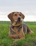 Charly..der schöne Hund aus Serbien!