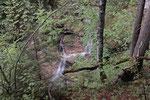 Kleiner Wasserfall, Wallgau